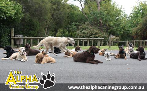 The Alpha Canine Group